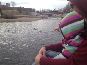Looking at the geese and ducks on the Platte River.